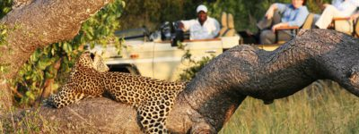 Golf, Safari and Wine Tour